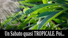 tropicale1